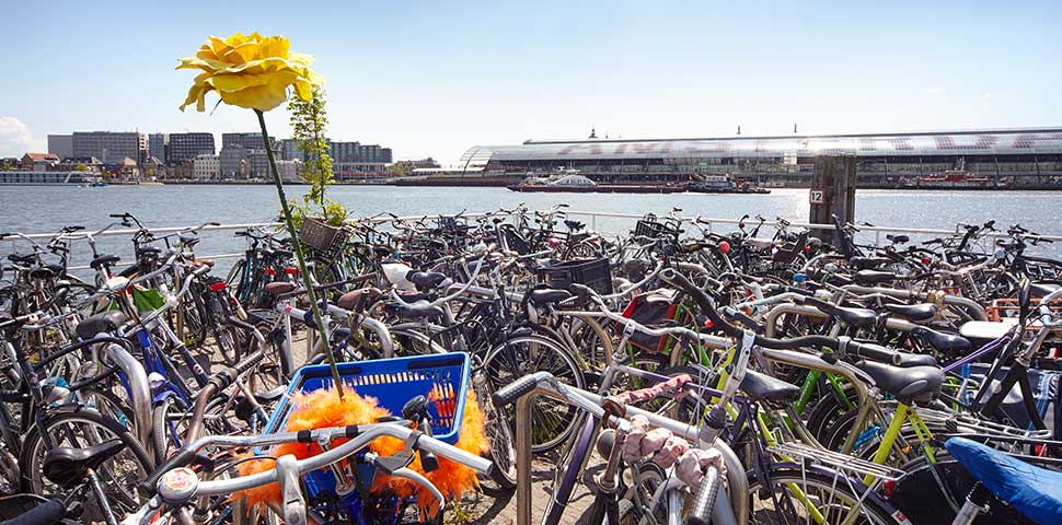 Flowers and bikes in Amsterdam